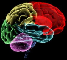 Study Links Dietary Supplement To Brain >> Study Links Nutrient Levels In Diet To Cognitive Ability Brain