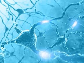 neuron_network